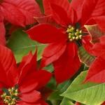 Decorar el jardín para la Navidad
