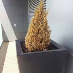 Jardineras en Zaragoza