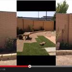 Proceso de construcción de un jardín