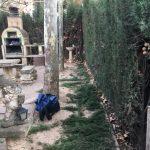 PODA DE PLATANEROS Y SETO CIPRES EN ZARAGOZA